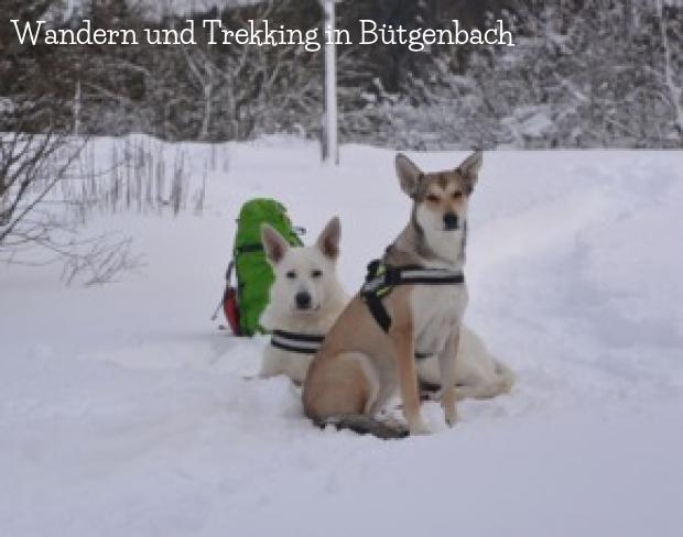 Wandern und Trekking in Bütgenbach und Umgebung
