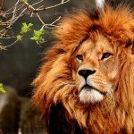 Größte Zoos in Deutschland