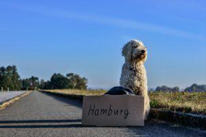 in Hamburg leben