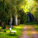 gesundheitliche Vorteile des Waldes
