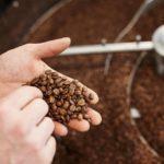 Wildkaffee Barista-Kurse